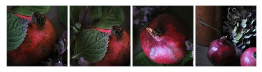 Pomegranates in a polyptych format.