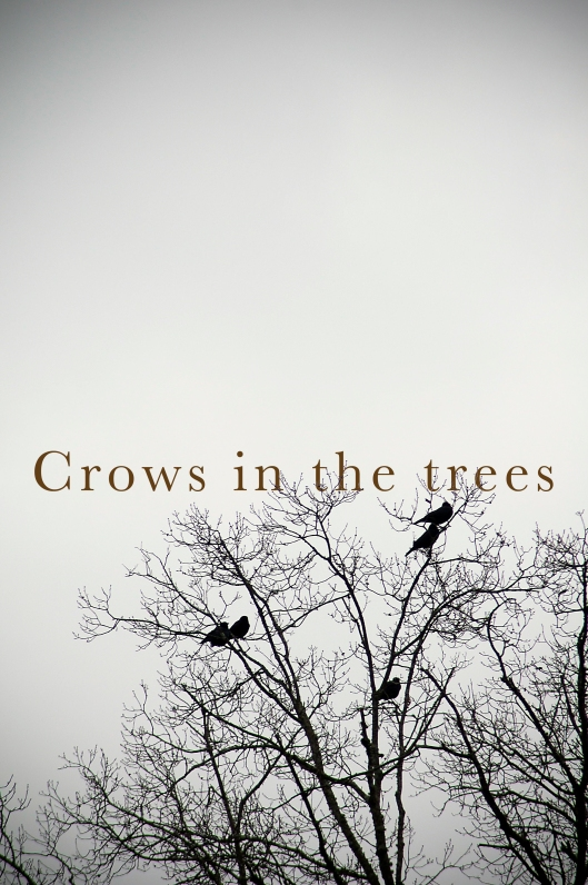 Crows in Trees plain flat